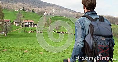 Uomo che fa un'escursione alla mandria di mucche che cerca le foto Seguire dietro Maschio adulto della gente di viaggiatore con z stock footage