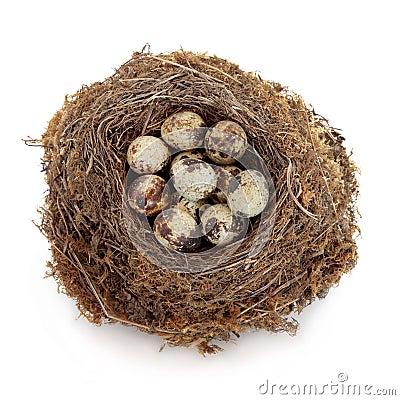 Uova di quaglie