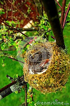 Uova nel nido degli uccelli
