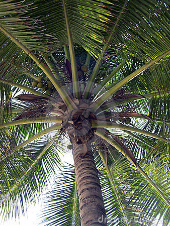 Free Up At A Palm Tree Stock Image - 55721