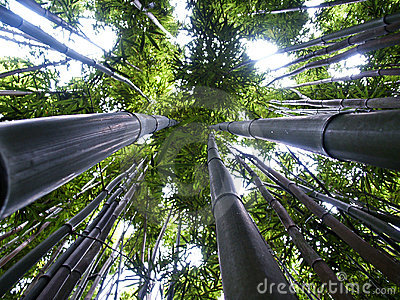 Up the bamboo