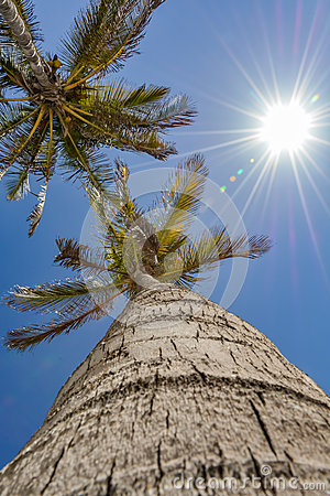 Free Up View Of A Palm Tree On A Beautiful Day Royalty Free Stock Photography - 74490347