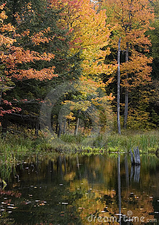 Upper Michigan Fall Colors by Quiet Stream