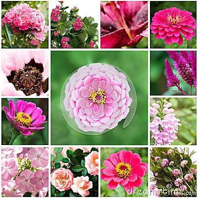 Uppsättning av blommor