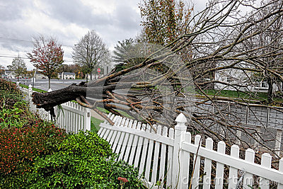 Uprooted Tree Crashes in Yard from Hurricane Sandy Editorial Photography