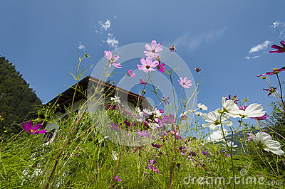 Upward look of purple and pink flowers with summer