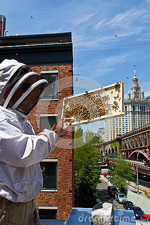 Free Urban Beekeeper Stock Photography - 27337242