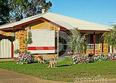 Urban Kangaroos #2