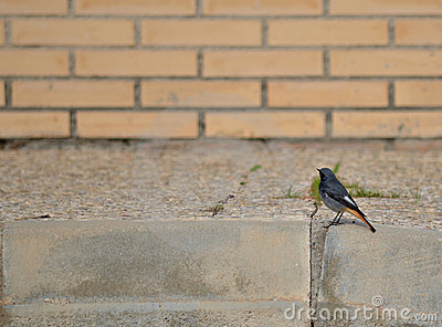 Urban little bird