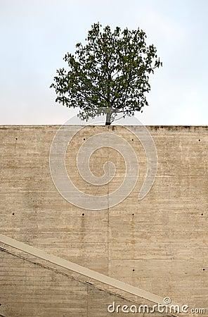 Urban tree in spring