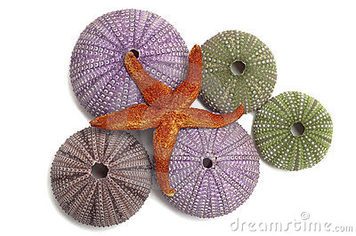 Urchin shells and a starfish