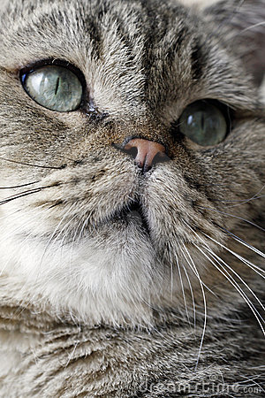 Urocza twarz kota