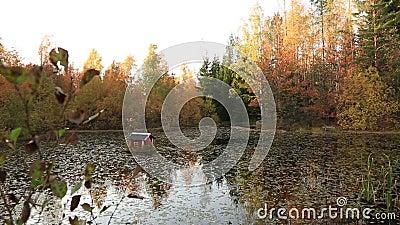 Ursnyggt höstlandskap med sikten av dammet som omges med färgrika träd med det lilla fågelhuset på vatten stock video