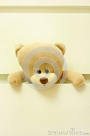 Urso na gaveta