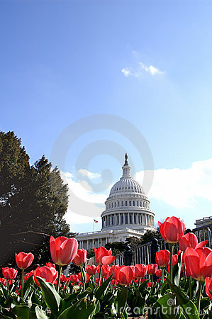 US Capital Building at Tulip Time