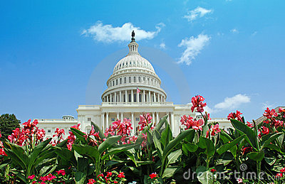 US Capitol with Summer Flowers