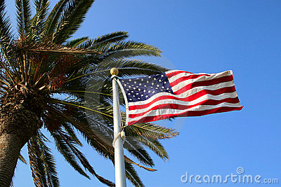US Flag with Palm Tree