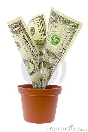 US money plant