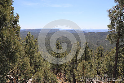 USA, Arizona - Endless Pine Forests in Central AZ