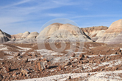 USA,AZ: Petrified Forest NP - Petrified Trees