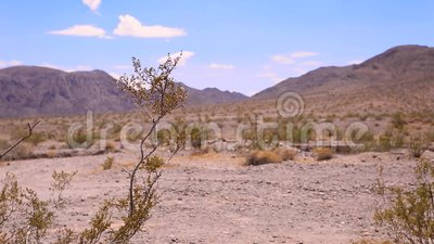 Usine de désert sauvage au-dessus des montagnes et du fond de ciel de nuage banque de vidéos