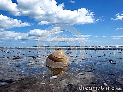 Łuska przy plażą