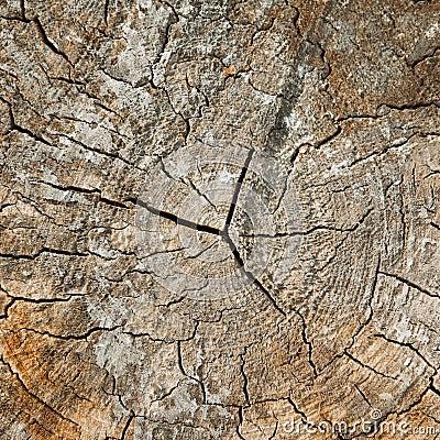 Сut tree, stump.