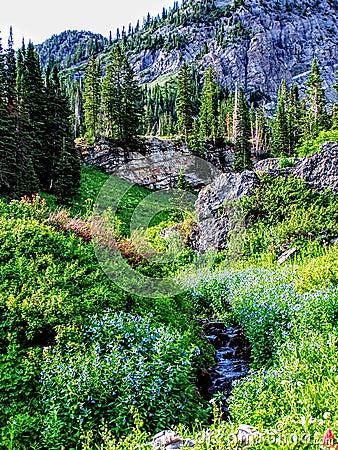Free Utah Canyon Hiking Trail Towards The Wasatch Mountains Stock Photos - 93840023