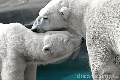 Uthärdar polart