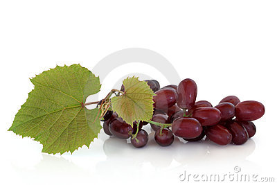 Uva rossa sulla vite