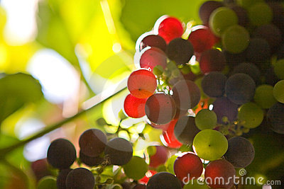 Uvas coloreadas