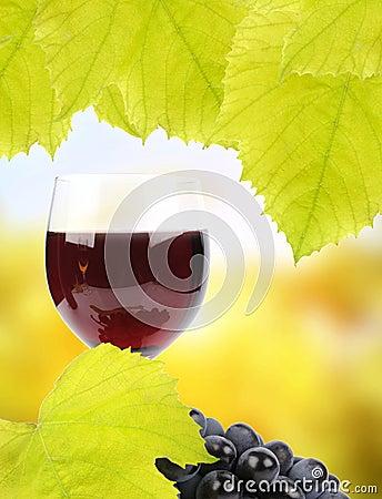 Uvas y vidrio de vino