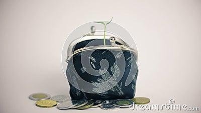 Växt som växer från plånboken, hög av mynt, begrepp för tillväxt för finans för pengaraffär som isoleras på vit arkivfilmer