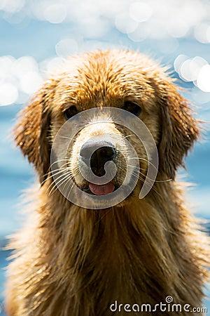 Våt hund