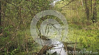 Végétation verte de marais banque de vidéos