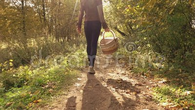 Vídeo do steadicam do movimento lento de uma mulher moreno nova que anda através das madeiras do outono que guardam uma cesta vídeos de arquivo