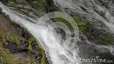 Vídeo vertical cascata alpina com água limpa e cristalina fluindo das montanhas video estoque
