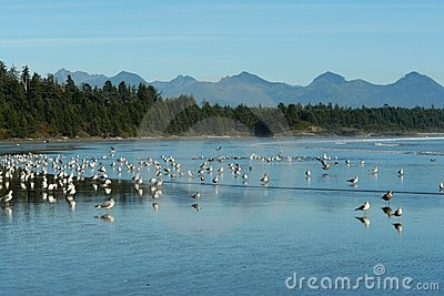 Vögel auf Strand