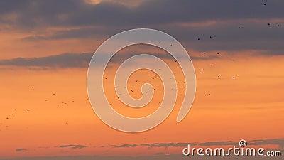 Vögel fliegen am Himmel stock video footage