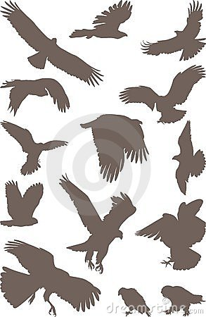 Vögel Raub