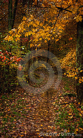 Våt trail