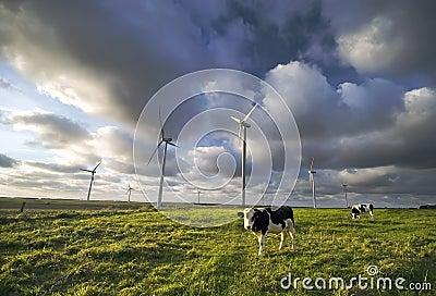 Vacas lecheras