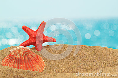 Vacation background with seashell and starfish