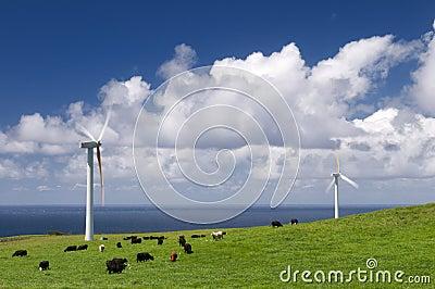 Vaches frôlant parmi des turbines de vent