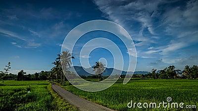 Vackra tidslinjer för paddyfält nära byn i Kedah Malaysia arkivfilmer