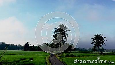 Vackra zoomtimelapse av paddyfält nära byn i Kedah Malaysia lager videofilmer