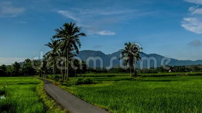 Vackra zoomtimelapse av paddyfält nära byn i Kedah Malaysia arkivfilmer