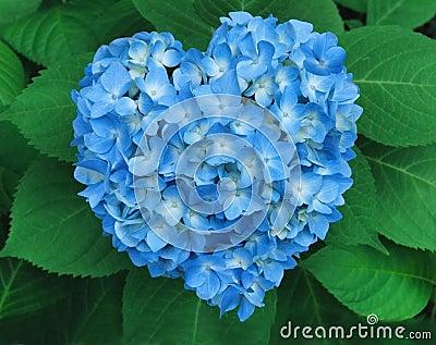 Valentine Blue Heart