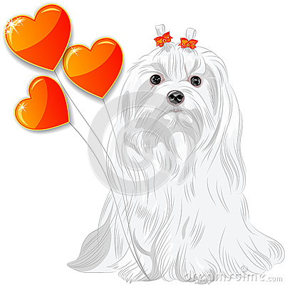 Valentine card with dog Maltese and hearts