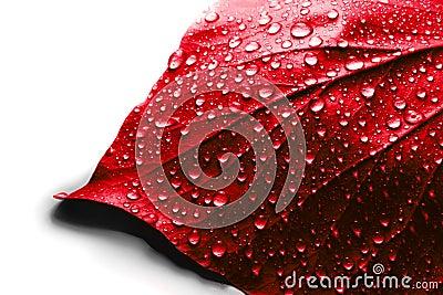 Valentine day red leaf
